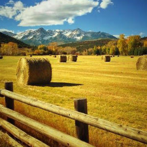 Double D Ranch in Ridgway Colorado
